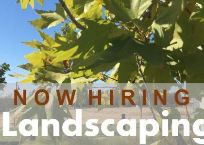 WJU Student Job Opportunity